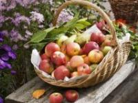 19 серпня – свято стиглих яблук